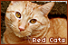 Cats: Red/Orange: