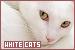 Cats: White