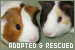 Adopted and Rescued Animals